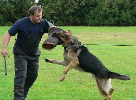 Best Dog Trainers In Illinois